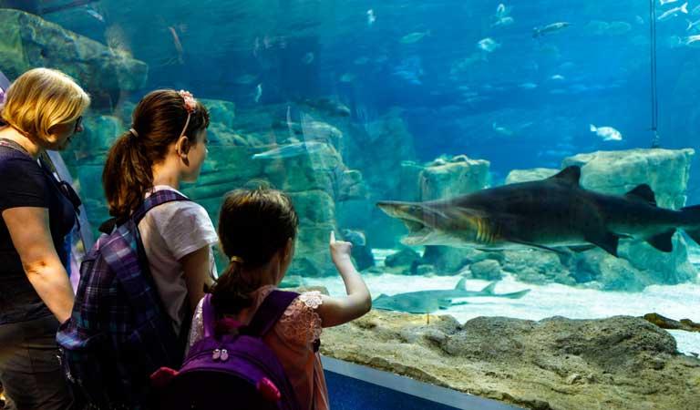 Monterey Bay Aquarium in California