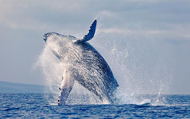 Monterey Whale Watching Package