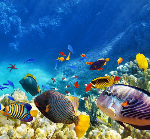 Monterey Bay Aquarium Package in Monterey Hotel