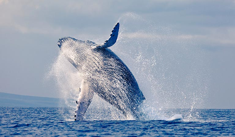 Monterey Whale Watching Package at California Hotel